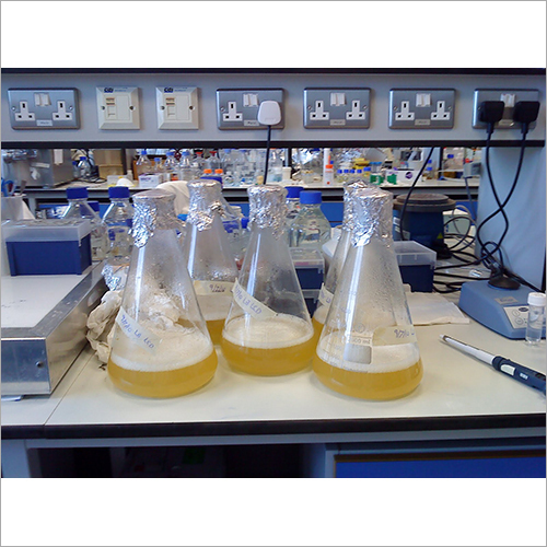 Waste Water Culture Enzyme