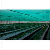 Nursery Plant House Net