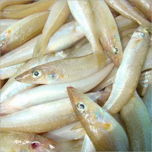 Fresh Kebaikan Fish