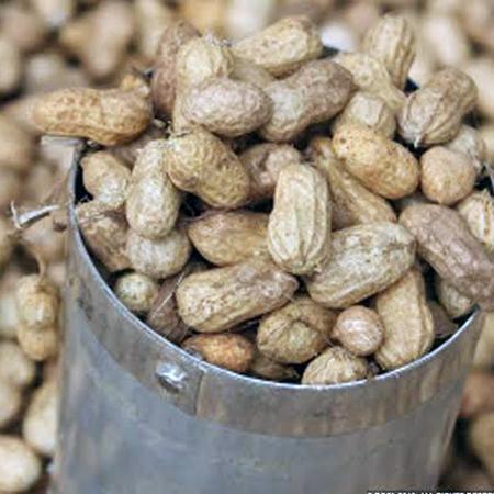 Groundnut