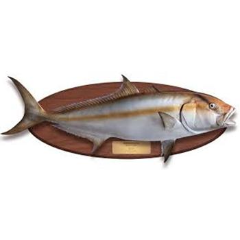 Coat Fish