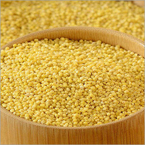 Indian Foxtail Millet