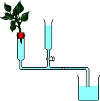 Potometer  (Laboratory Glassware)