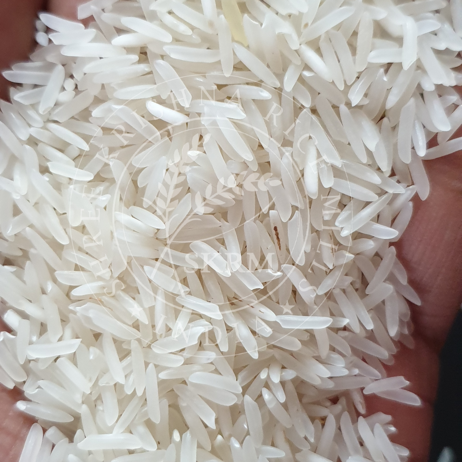 Sharbati Raw Basmati Rice