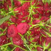 Gallica Rose