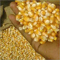 Corn Maize Grain