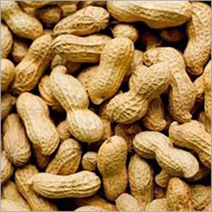 Dry Groundnut Seeds