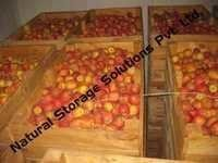 Apple Cold Storage