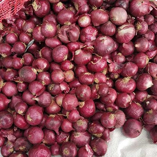 Bangalore Rose Onion