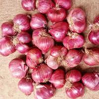 Podisu Janda Shallot Onion