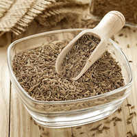 Fresh Cumin Seeds