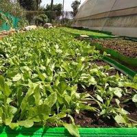 HDPE Garden Bed