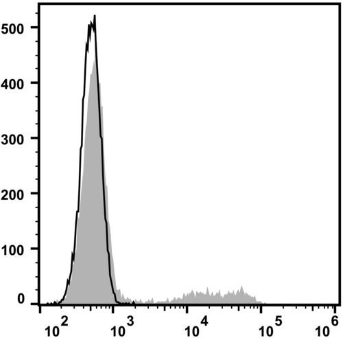 cd24 antibody