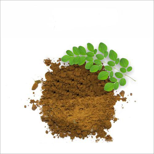 Moringa Extract Powder
