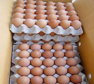 Duck Eggs Suppliers, Duck Eggs Exporters, Manufacturers