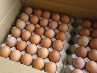 Fresh Chicken Eggs (Brown/White)
