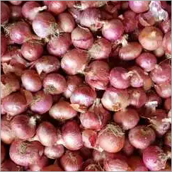 Nashik Fresh Onion
