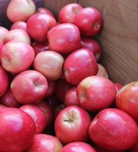 Fresh Gala Apples From spain, france and USA