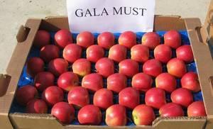 Fresh Red Gala Apples