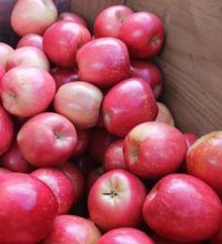 Fresh Apples ( Fuji, Gala, Red, Golden Delicious
