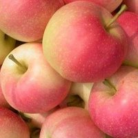 Apple for Sale, Gala , Green, Fuji, Red, Pink Lady,