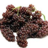 Top Grade Export Grapes