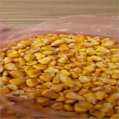 Quality Grade 1 Yellow Corn & White Corn/Maize