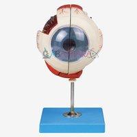 Eye Model on Stand (Model)