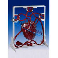 Pumping Heart (Model)