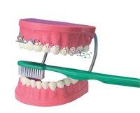 Dental Care (Model)