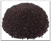 Mustard seed (Rai)