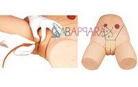Female Catheterization Training Simulator