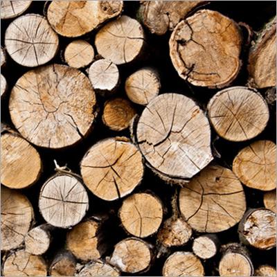Raw Wooden Log