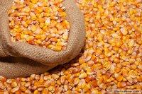 Yellow maize(Corn)