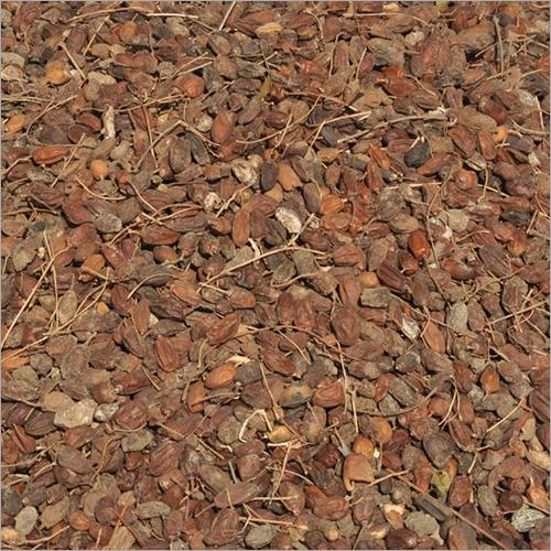 Dried Neem Fruit