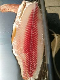 Fish Skin Peeling Machine