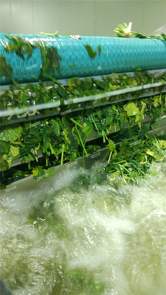 Leaf vegetable washing cutting line