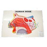 Human Nose Labappara