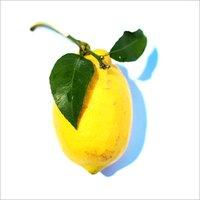 Fresh Assam Lemon