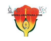 L.S Flower Model Labappara