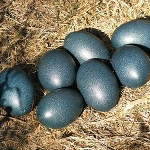 Kadaknath Poultry Egg