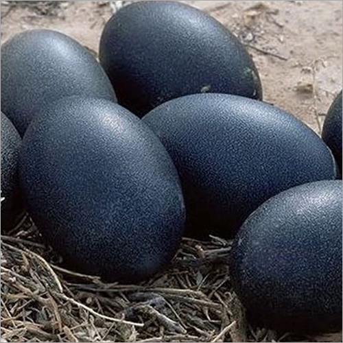 Kadaknath Black Egg