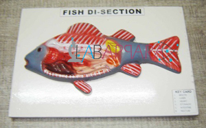 Model of Fish on Board Labappara