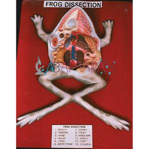 Model of  Frog on Board Labappara