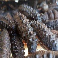 Dried Sea Horse, Dried Sea Cucumber.