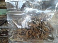 Wholesale Dry Sea Cucumber/Best Supply of Dry Sea Cucumber