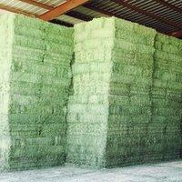 2019 Premiun Quality Alfalfa Hays for Sale