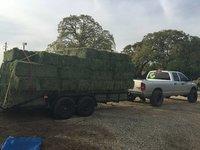 Quality Alfafa Hay for Animal Feeding Stuff Alfalfa / Alfalfa Hay