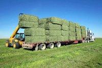 Quality Green Alfafa Hay for Animal Feeding.
