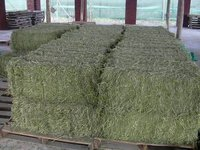 Top Quality Alfafa Hay for Sale / Grade A